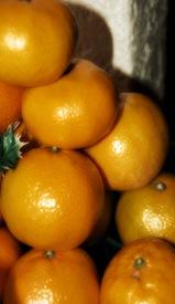 orangesewe75