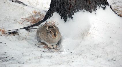 close bunny